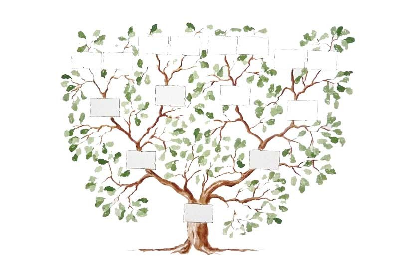 arbre-genealogique-les-grandes-vacances-810x540